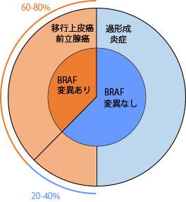 図1.尿路上皮系病変におけるBRAF 変異頻度の模式図